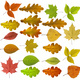 Colorful And Bright Background Made Of Fallen Autumn Leaves - PhotoDune Item for Sale