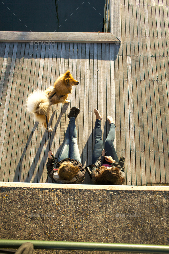 High angle view of multi-ethnic couple with dog relaxing on boardwalk outdoors - Stock Photo - Images