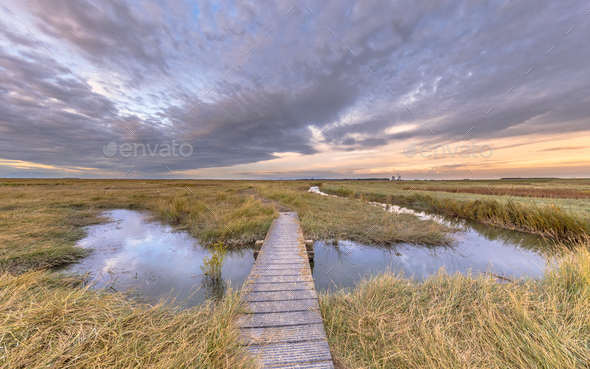 Boardwalk in Tidal Marshland nature reserve Saeftinghe - Stock Photo - Images