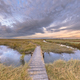 Boardwalk in Tidal Marshland nature reserve Saeftinghe - PhotoDune Item for Sale