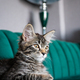 Kitten lying on the green sofa - PhotoDune Item for Sale