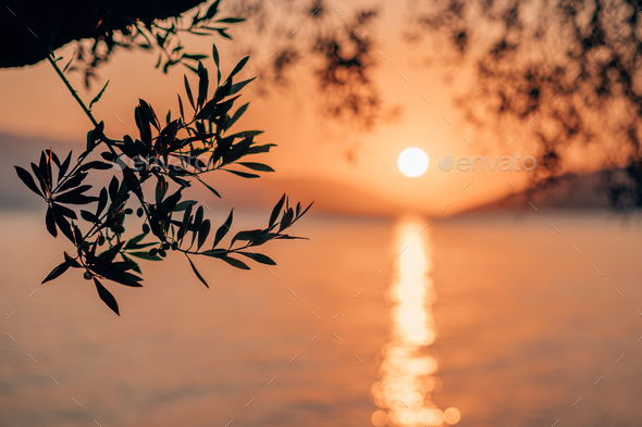 Silhouette olive tree branch in morning warm sunrise light. Sun shape above Mediterranean sea. Sun - Stock Photo - Images