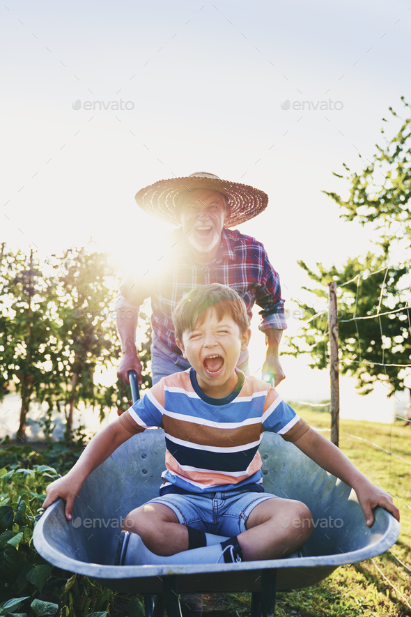 Grandfather driving his grandson in wheelbarrows in the garden - Stock Photo - Images