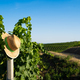 straw wicker hat hanging on a pole in a vineyard - PhotoDune Item for Sale