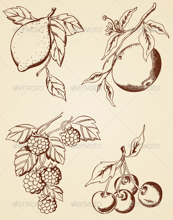 Hand Drawn  Berries and Fruits - Flowers & Plants Nature