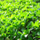 Green Leaves On Tree - VideoHive Item for Sale