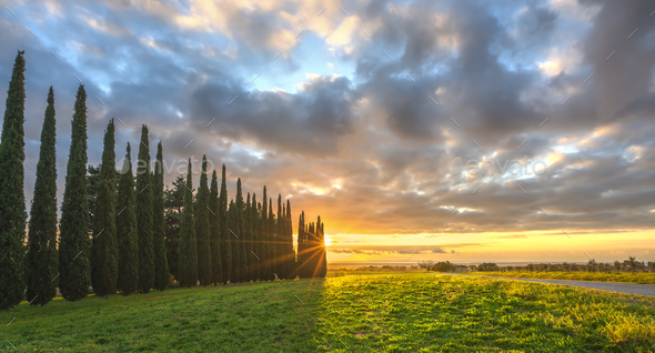 Sunset landscape in Maremma. Rural road and cypress trees. Casale Marittimo,Tuscany, Italy - Stock Photo - Images