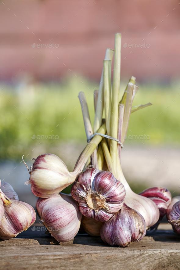 Organic garlic - Stock Photo - Images