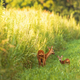 Roe deer and a fawn - PhotoDune Item for Sale