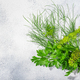 Fresh Dill  and Parsley leaves, florets, fruits atop grey textured backdrop w/  copy space, top view - PhotoDune Item for Sale