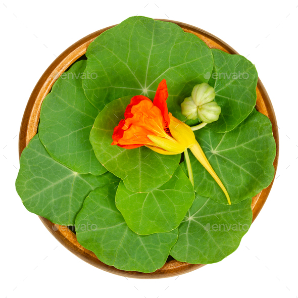 Garden nasturtium, leaves, flower and unripe seed pod in wooden bowl - Stock Photo - Images