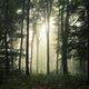 Green forest environment with fog - PhotoDune Item for Sale
