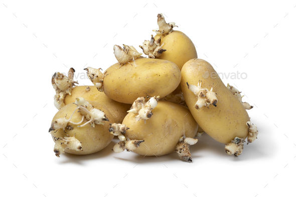 Heap of sprouted organic potatoes i - Stock Photo - Images