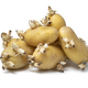 Heap of sprouted organic potatoes i - PhotoDune Item for Sale