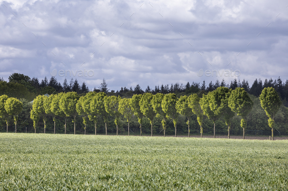 green row of trees on sunny day - Stock Photo - Images