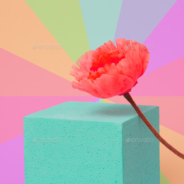 Poppy flower in colorful geometry space. Minimal art - Stock Photo - Images