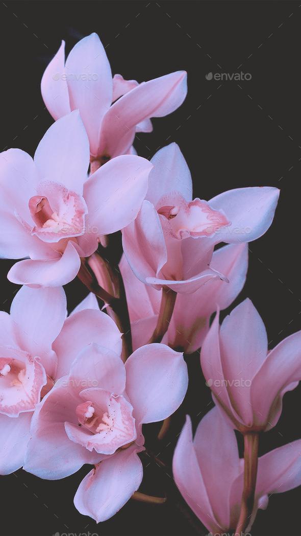 Fashion Aesthetic Wallpaper Phone White Flowers On Black Background Stock Photo By Evgeniyaporechenskaya