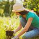 Woman gardening - PhotoDune Item for Sale