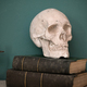 Replica of a human skull on vintage books - PhotoDune Item for Sale