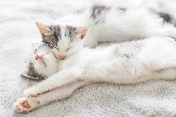 Image result for adorable kittens