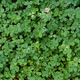 Natural background of green clover - PhotoDune Item for Sale