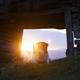 Dog in sunset light near an old hovel. - PhotoDune Item for Sale