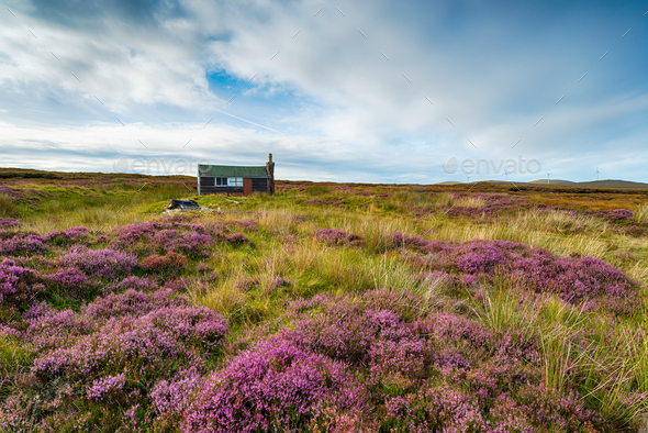 A Scottish shieling hut on peat bog near Stornoway - Stock Photo - Images