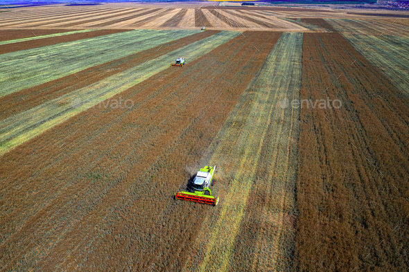 Harvesting time - Stock Photo - Images