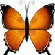 Cartoon Butterflies - VideoHive Item for Sale
