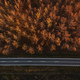 Aerial view of empty road and autumnal poplar cottonwood forest - PhotoDune Item for Sale