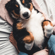 Happy Bernese Mountain Dog dog in luxurious bright colors scandinavian style bedroom with bed - PhotoDune Item for Sale