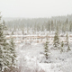 Snow falling boreal forest marshland pond - PhotoDune Item for Sale