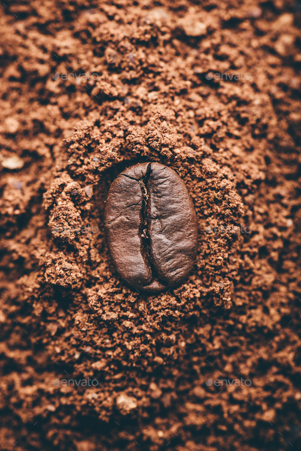 Coffee bean on heap of grinded coffee - Stock Photo - Images