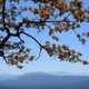 Oak tree branch with autumn red leaves on mountains and blue sky background - PhotoDune Item for Sale