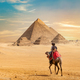 Camel and the Pyramids - PhotoDune Item for Sale