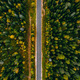 Aerial view of rural road and colorful autumn forest in Finland. - PhotoDune Item for Sale