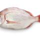 crimson sea bream - PhotoDune Item for Sale
