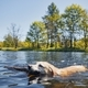 Playful dog swimming in lake - PhotoDune Item for Sale