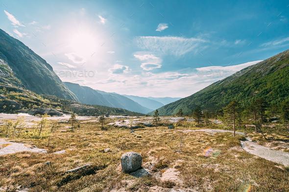 Kinsarvik, Hordaland, Norway. Summer Forest In Hardangervidda Mountain Plateau. Famous Norwegian - Stock Photo - Images