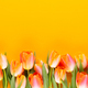 Yellow pastels color tulips on yellow background. - PhotoDune Item for Sale