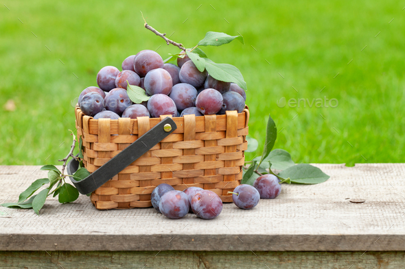 Ripe garden plums in basket - Stock Photo - Images