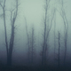 Mysterious haunted foggy forest - PhotoDune Item for Sale