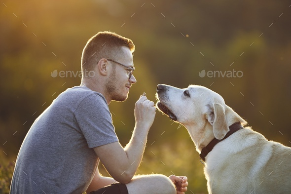 Man playing with his dog on meadow at sunset - Stock Photo - Images