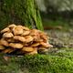 Mushroom and moss - PhotoDune Item for Sale