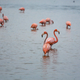 Flamingo in Mexico - PhotoDune Item for Sale