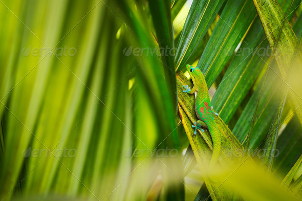 Tropical Lizard - Stock Photo - Images
