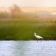Eurasian spoonbill - PhotoDune Item for Sale