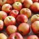 Ripe red and yellow apples - PhotoDune Item for Sale