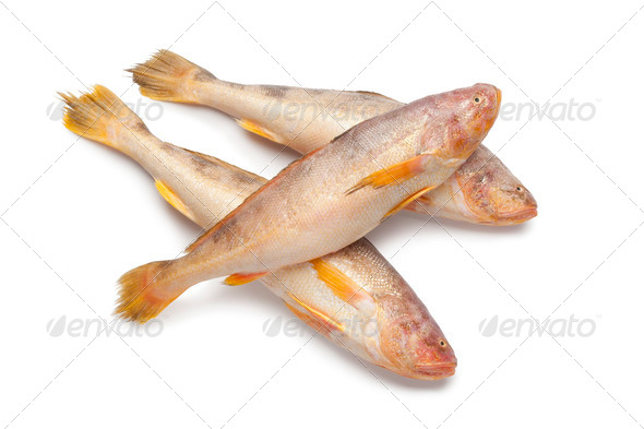Fresh raw butterfishes - Stock Photo - Images