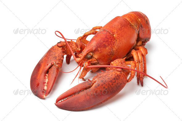 Fresh cooked lobster - Stock Photo - Images